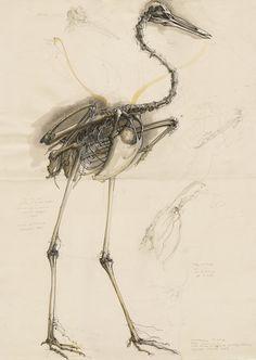 Kết quả hình ảnh cho anatomy Crane