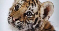 Resultado de imagen de animales bonitos