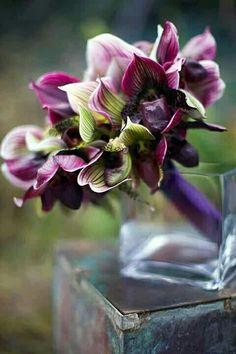 Stunning Wedding Bouquet Of: Aubergine/Green Lady's Slipper Orchids