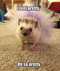 I feel pretty and witty and briiiight!