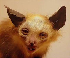 this is from the Bristol Museum. Shame this Aye aye has seen better days Funny Taxidermy, Creepy, Scary, Photo Images, Live Animals, Macabre, Funny Cute, Hilarious, Kittens