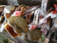 Older Emei Shan locks.       credit: Clare Eisenberg