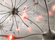 Imagem - Sinapses