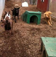The race is on!  Bruno, Tucker and Clara chase Ginger! #DogRaces #DogGames #Speed #Run