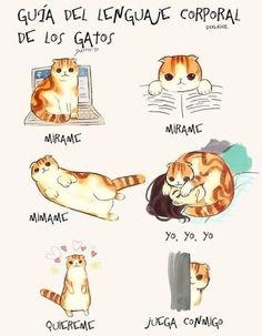 imagen graciosa de guía de lenguaje corporal de los gatos. Más en www.lasfotosmasgraciosas.com