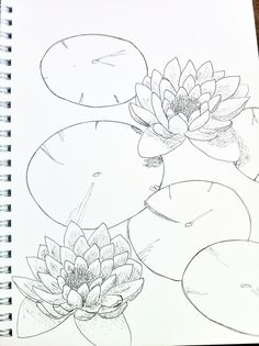 how to draw a water lily see more lily pad sketch