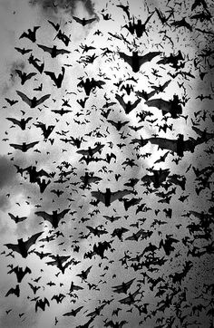 photography Black and White creepy dark art slobbered Beautiful Creatures, Animals Beautiful, Cute Animals, Arte Obscura, Creatures Of The Night, Beltane, Fauna, Dracula, Black And White Photography