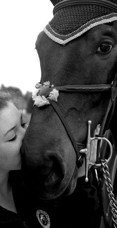Equestrian for Life  www.thewarmbloodhorse.com