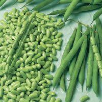 Struikboon 'Flageolet met groene bonen' [=droogboon]  (Comment récolte les graines potagères dans son jardin: la culture des Porte-Graines à la portée de tous - Haine-Saint-Pierre 1917)