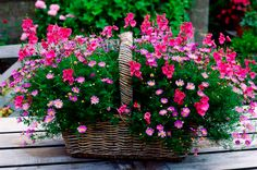 Patio flower basket #outdoor #fall