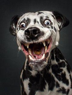 Stillbilder på hundar som fångar godis i luften. Hur kul kan det bli? Väldigt!