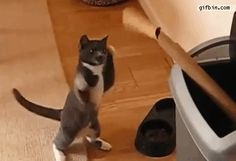 I Hate You!! I Hate You!!! See this cat in action here http://pewpaw.com/video-blue-bicol ……