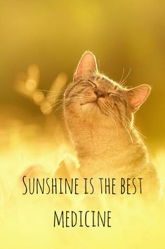 Sunshine is the best medicine.  Click on this image to see the most sophisticated collection of inspiring quotes!