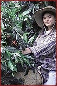 HKC Company Hawaii Tourism, Kona Coffee, Coffee Company