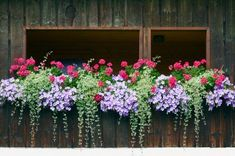 40 Window and Balcony Flower Box Ideas (PHOTOS) Nothing dresses up a window or balcony like flower boxes. Check out these 40 stunning flower and balcony flower box arrangements. Balcony Planters, Window Planter Boxes, Garden Planters, Box Garden, Green Garden, Deck Railing Planters, Fall Planters, Planter Ideas, Geranium Planters