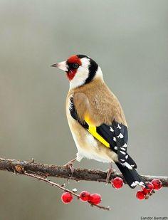 Looks like someone decorated this bird #Birds