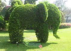 Look at this! I wanna have it on my garden!