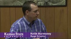 From the 100th Beef Research Roundup at K-State's Western Kansas Agricultural Research Center in Hays: K-State rangeland scientist Keith Harmoney provides an update on the multi-year research he has conducted at the center on modified intensive early stocking of calves on short-grass #prairie, and the flexibility that #grazing program offers to the western Kansas #cattle producer. #KState