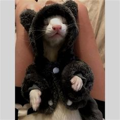 Baby Ferrets, Funny Ferrets, Pet Ferret, Animals And Pets, Funny Animals, Wild Animals, Long Cat, Cute Little Animals, Cute Creatures