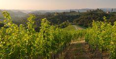 """Die Einzellage """"Hochsulz"""" des Weinguts SKOFF ORIGINAL Vineyard, The Originals, Vine Yard, Vineyard Vines"""
