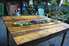 Is That a Pallet Swimming Pool? 24 DIY Pallet Outdoor Furniture Creations and Big Builds: #10 Table and succulent planter combo