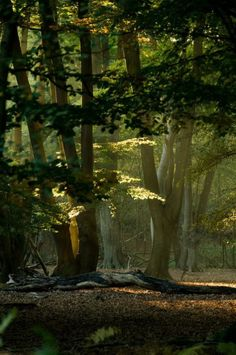 "bonitavista: ""Black Forest, Germany photo via gloria """