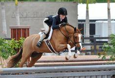 Hollister - Welsh Pony - Hunter for sale on Bigeq.com