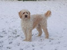 Toffee in the snow.