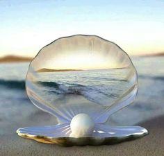 shell....memories of the beach