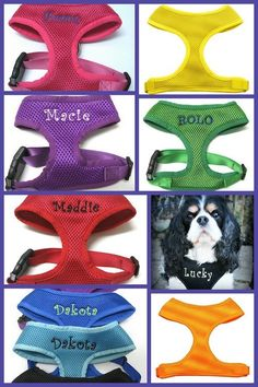 Spring is coming...Celebrate with a New Personalized Soft Mesh Dog Harness Custom Embroidered by PetsWithStyleBoutiq, $22.99 Etsy