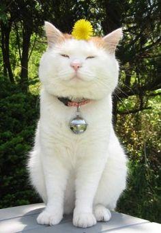 たんぽぽ Shiro, Science And Nature, Animals And Pets, Dog Cat, Therapy, Friends, Cats, Pictures, Animaux