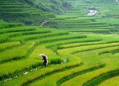 A Hmong's Trek Through Vietnam: Sapa Sisters Trekking Adventures (Sapa, Vietnam) – MJ Approved Vietnam Holidays, I Love The World, Sa Pa, North Vietnam, Red River, Vietnam Travel, Chai, Southeast Asia, Laos