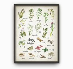 Kräuter und Gewürze Aquarell Küche Wand Kunst Poster - rustikale Küche Print - Garten-Pflanzen-Wintergarten-Dekor - Geschenkidee für ihre (B242)