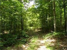 Hohenwald, Lewis County, Tennessee Land For Sale - 81.8 Acres