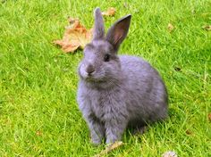 One of my best bunny pictures from the UVic campus.