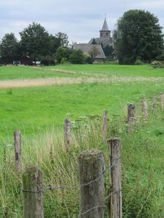 Madelief: Holland, Limburg, Wahlwiller