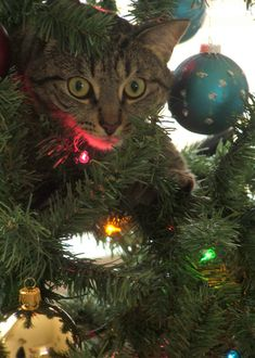 29 Guilty Faces of Cats in Christmas Trees - Oh my goodness! So funny!