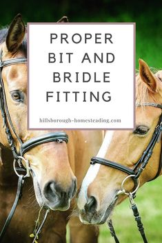 Before you even put your foot in a stirrup, it is vitally important to ensure your bridle and saddle both fit correctly. A bridle that does not fit correctly can not only be dangerous, but can seriously damage the most sensitive part of your horse. In thi Horse Bridle, My Horse, Horse Love, Horse Riding, Horse Feed, Western Riding, Riding Gear, Dressage, Paint Horse