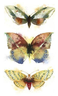 KO.51 butterflies moths 7 - giclee print from original watercolour