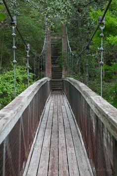 Visit Ravine Gardens State Park For Unexpected Views In Florida