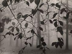 Max Baur - Leaves