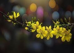 Gałązka, Żółte, Kwiaty