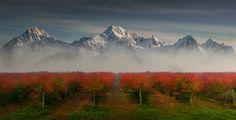 Blueberry fields (Washington) by Lou Nicksic on 500px