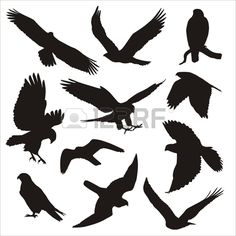 bird of prey silhouettes