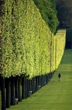 Wonderful Green Wall in Château de Sceaux, Paris, France