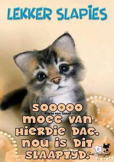 Good Night Wishes, Good Night Quotes, Evening Greetings, Goeie Nag, Afrikaans, Good Morning, Animals, Encouragement, Sleep