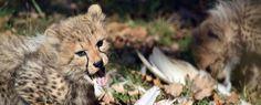 Zoo de Bâle automne 2017 Fox, Animals, Outer Space, Animales, Animaux, Animal, Animais, Foxes