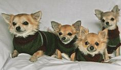 #Little dogs all in a row  Like,Repin,Share, Thanks!