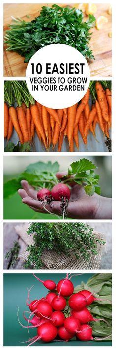 Vegetable gardening, easy vegetable gardening, gardening, gardening tips and tricks, easy veggies to grow, gardening hacks, popular pin, gardening for beginners.