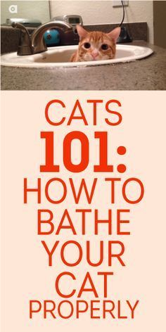 This us a pretty cute video.  Cats 101: How To Bathe Your Cat Properly